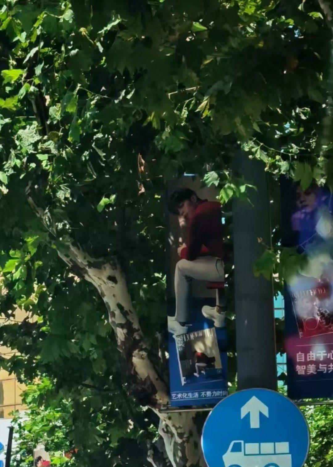 """邓伦""""坐在树上""""被粉丝偶遇… 真相曝光笑翻全网!-Woah.MY"""